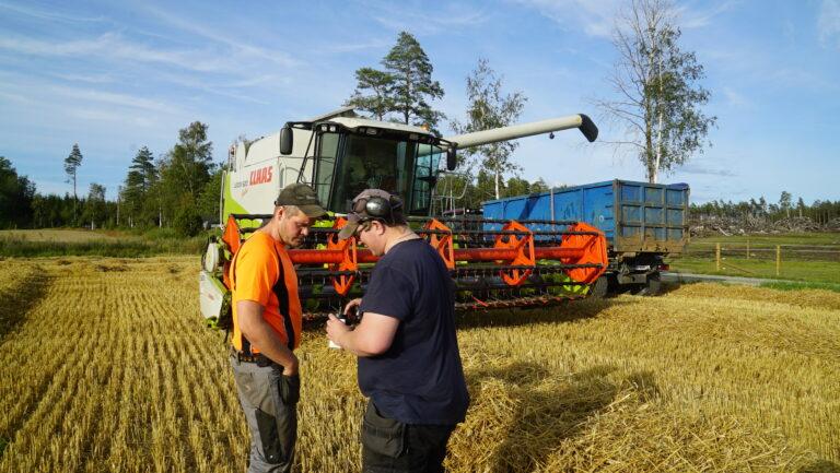 Hans-Trygve og Jon Olav vurderer at høsthveten som holdt i underkant av 20 prosent burde komme i hus før det meldte regnværet.