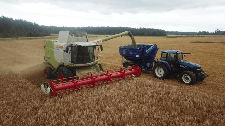 For å benytte størst mulig av treskerens tid til å skjære korn, praktiserer Hersleth flyvende tømming med en nyinnkjøpt skruevogn.