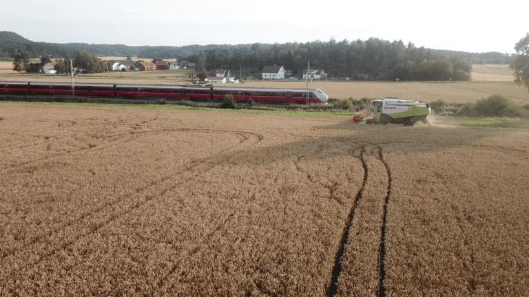 Jordsmonnet rundt Vik gård avler godt, og dette året er ingen unntak.