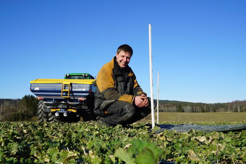 Høstrapsdebutant benyttet nattefrosten til å kickstarte vekstsesongen