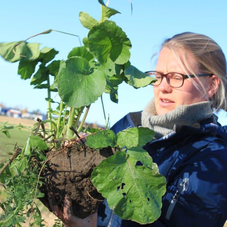 HELÅRS PLANTEDEKKE: NLR-rådgiver Maren Holthe undersøker en jordklump med ulike fangvekster.