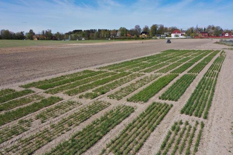 Feltene for høsthvete i forgrunnen, feltene for de vårsådde vekstene i bakgrunnen.