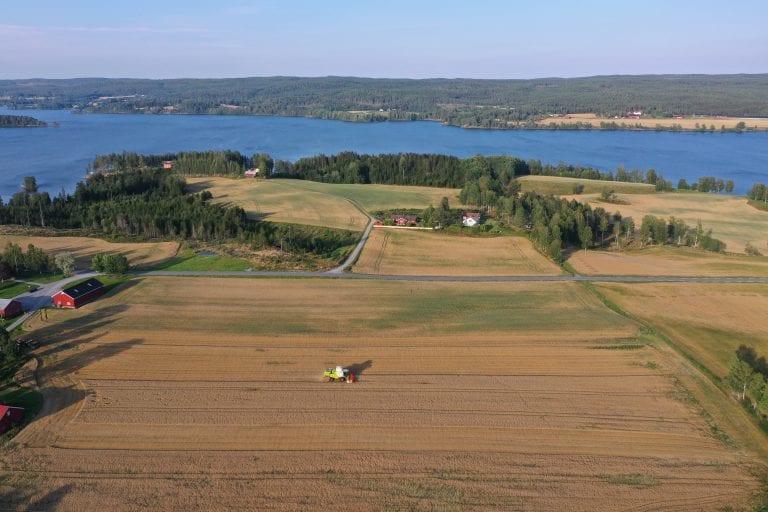 Tidlig i august var det fine høsteforhold for bøndene rundt Rødenessjøen.